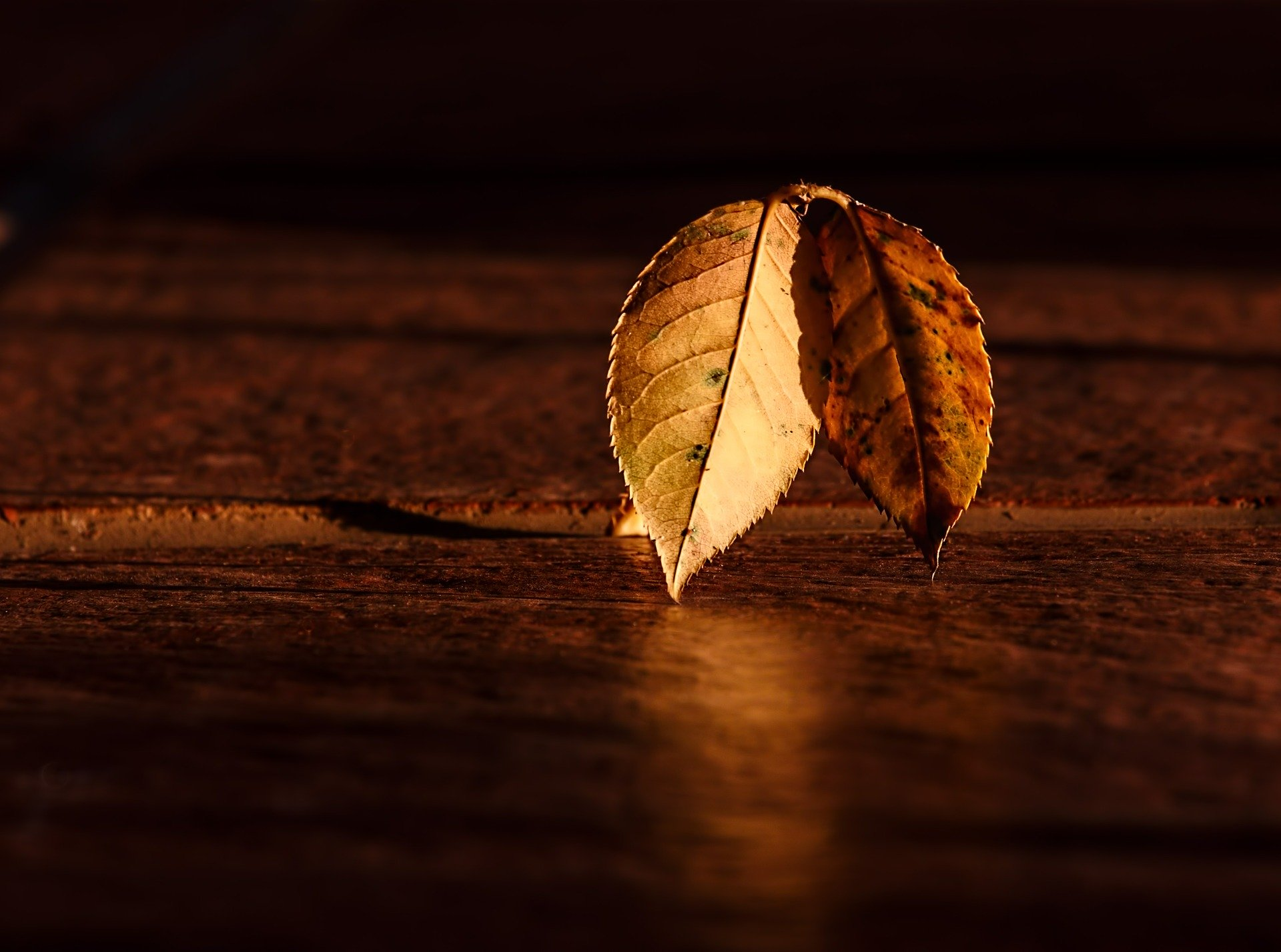 autumn leaves on wooden